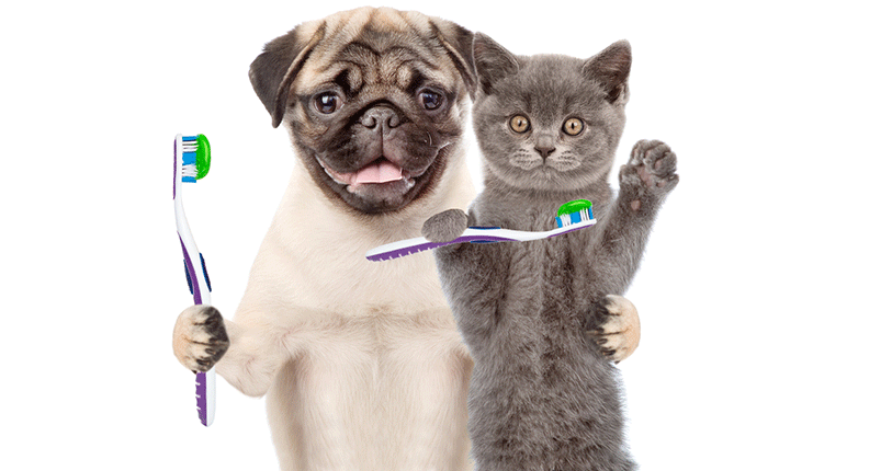descriere-cabinet-veterinar-qincyvet